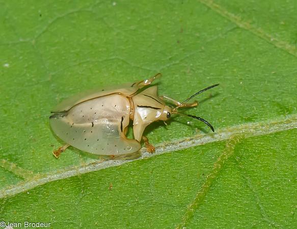 Insectes et araignees du Panama